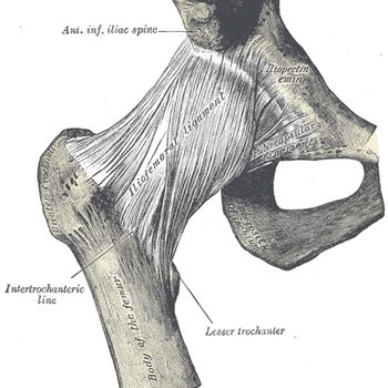 This is just one part of the complex hip joint.