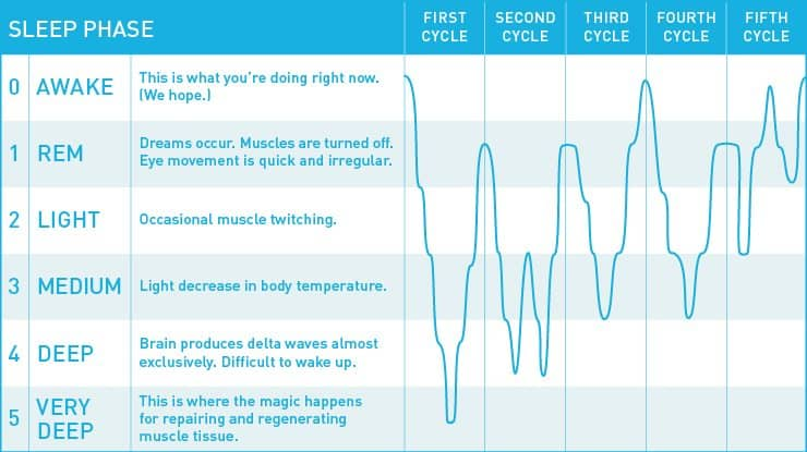 chart describing the various phases of sleep