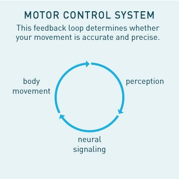 Motor Control Feedback Loop determines whether your movement is accurate