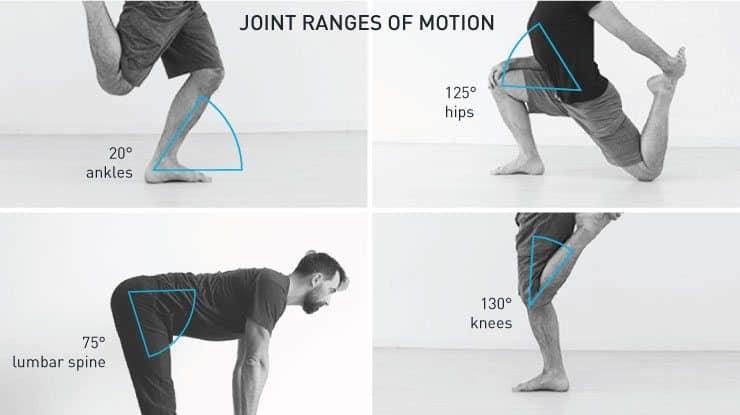 Bodyweight Squat Joint Angles