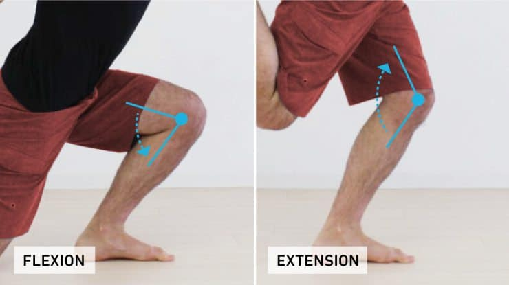Knee flexion and extension