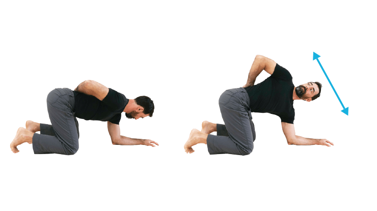 Back Stretches - Quadruped Torso Rotation