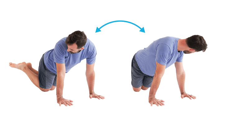 Back Stretches - Wag Tail