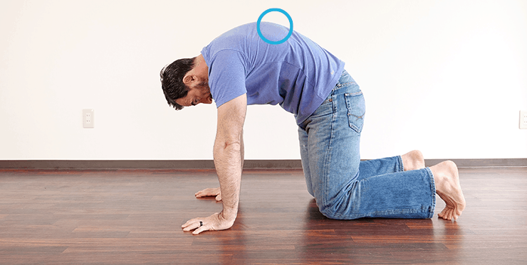 gmb fitness joint mobility quadruped spine circles