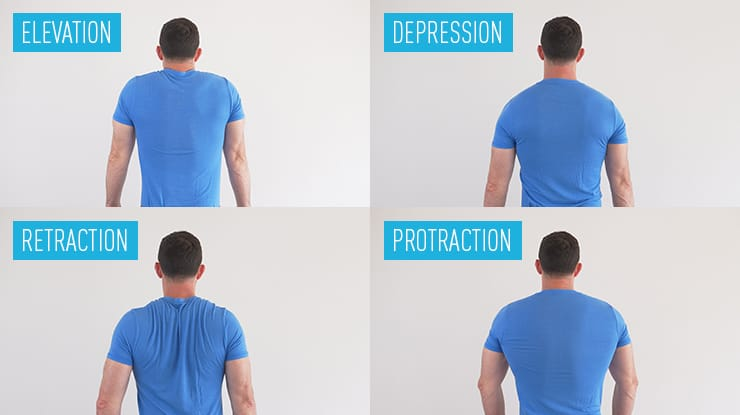 GMB Fitness Elevation, Depression, Retraction, Protraction